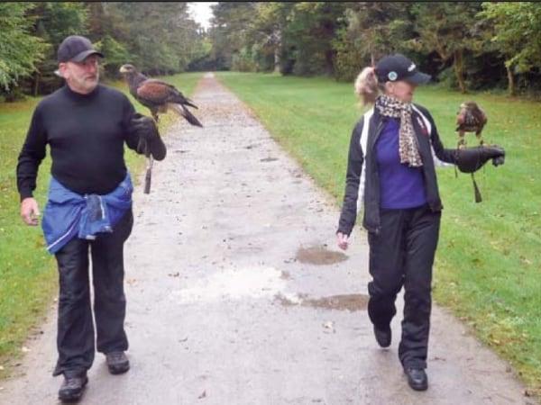 Happiness is taking a hawk walk.