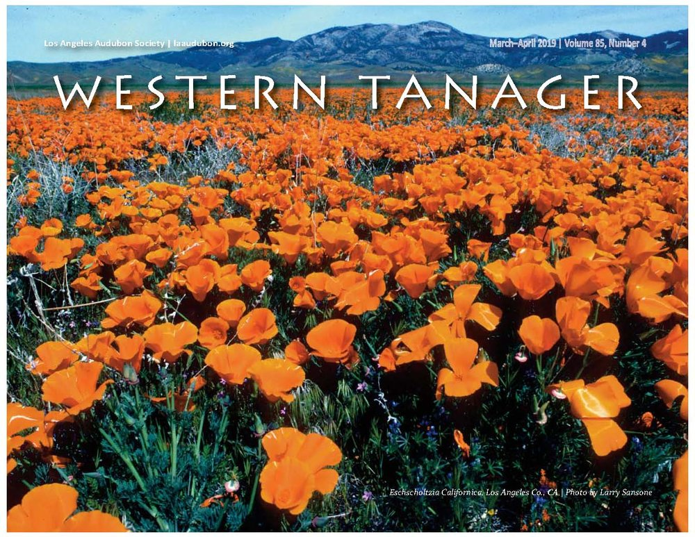 Cover 2019 Mar-Apr Western Tanager_photo Poppies by Larry Sansone.jpg