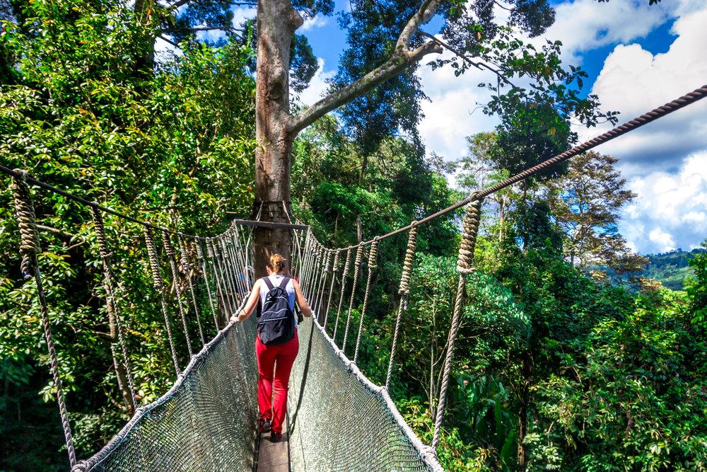 空中漫步╱樹頂走廊