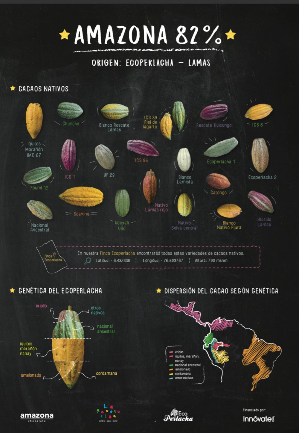 Cacaos nativos