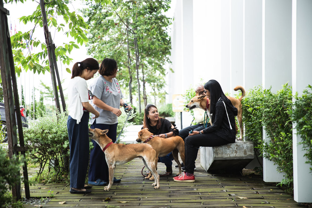 """DogQ - Spending time with and walking our adopted dogs are one of the favourite things about going to work for many Allstars. These are their """"happy pills"""" when days are stressful."""