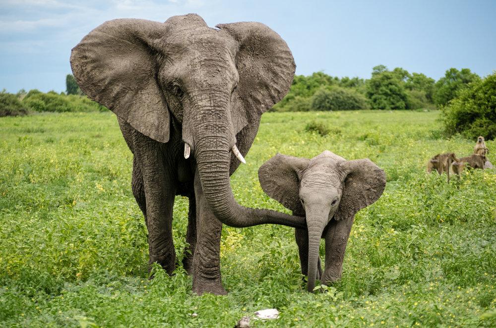 June Foster_Page 4 Bio_Elephant_shutterstock_1150709735.jpg