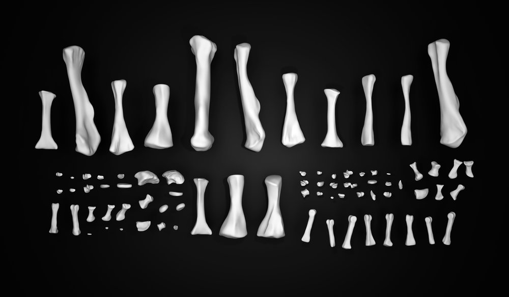 dataset_Not a Single Bone 00.jpg