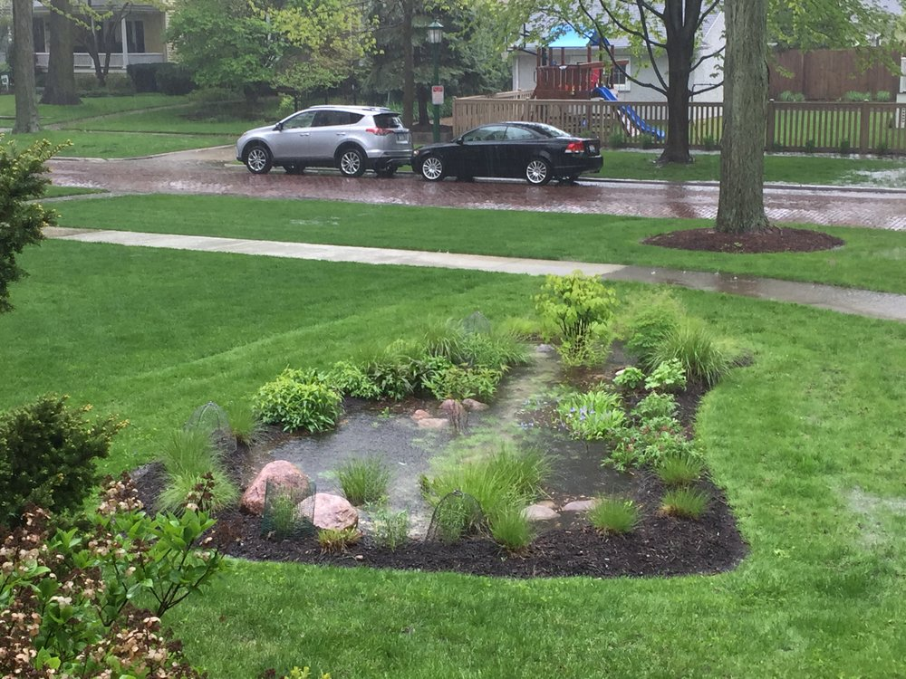 Rain garden full of water