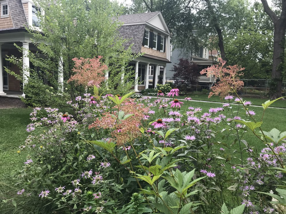 IMG_7840 Rothschild rain garden summer.jpg