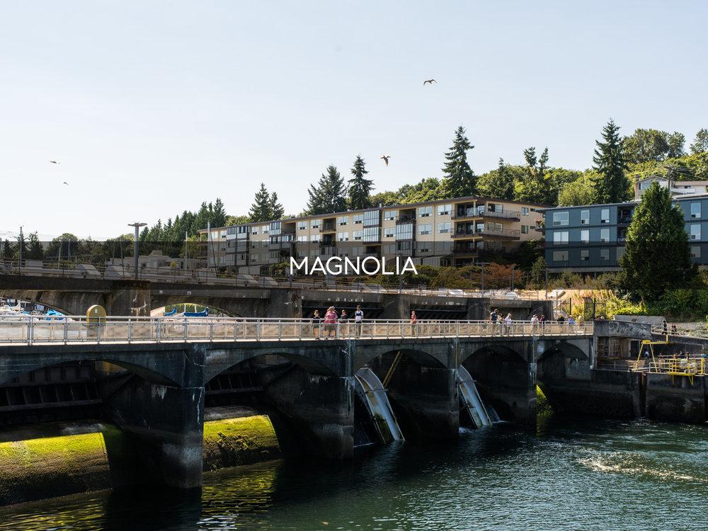 Magnolia-5042.png