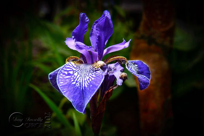 bloom12-2324_120601.jpg