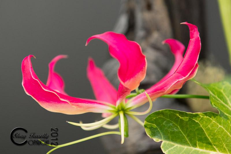 bloom12-2413_120601.jpg