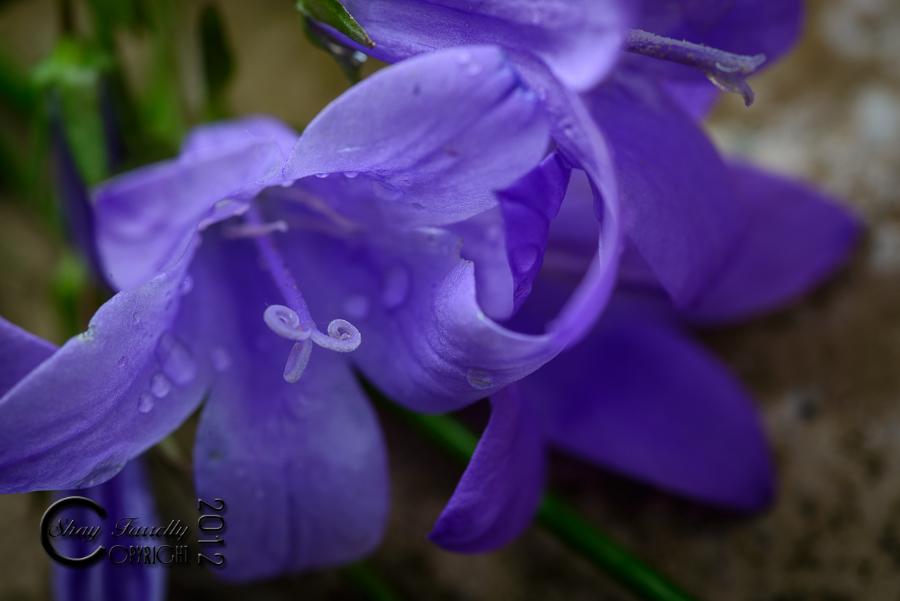 flowergarden-2093_120529.jpg