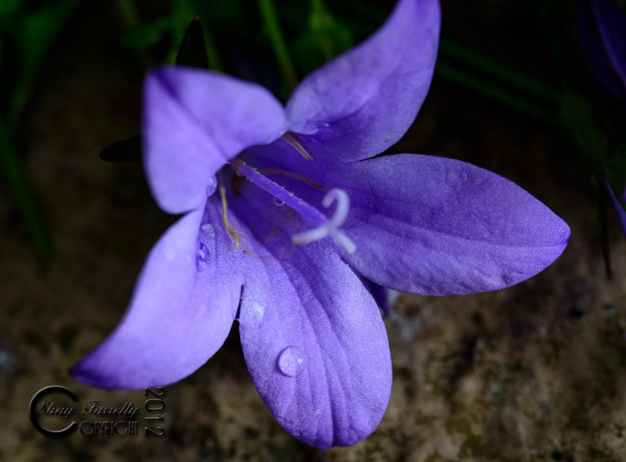 flowergarden-2080_120529.jpg