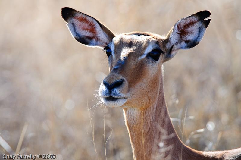 KrugerPark09-319-2.jpg