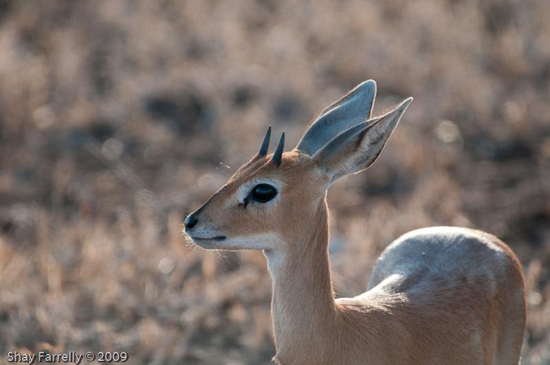 KrugerPark09-527.jpg