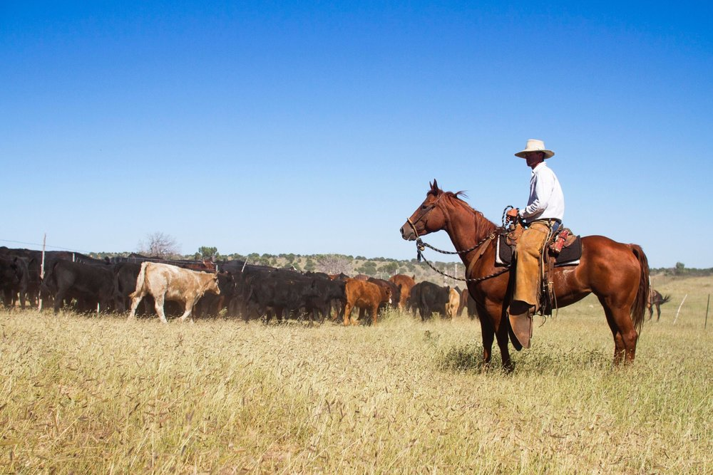 mindful stockmanship - We are lifelong students of animal behavior and stock handling, and work with our selves, our dogs, and our horses to handle livestock in ways that support their health and welfare.photo by Lucy Ellis