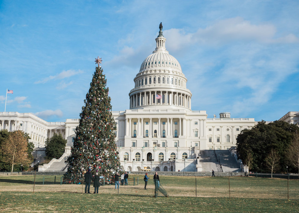 The Christmas tree at the Capitol building in Washington D.C.