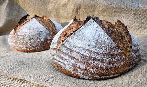 Wild Sourdough Boules