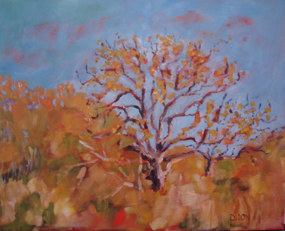 Garry Oak 16x20 in.