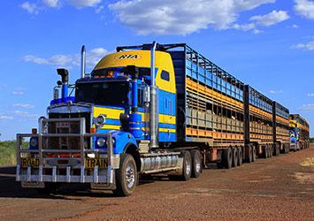 Livestock Transport -
