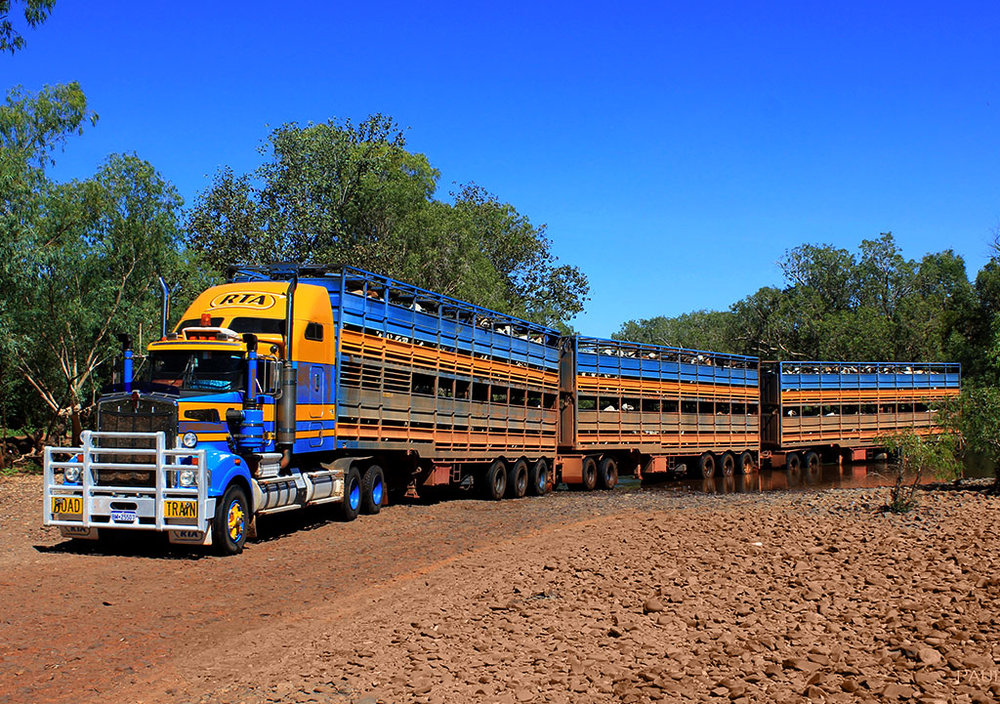 RTA-Cattle-Trucks-in-Mount-Stanford-NT.jpg