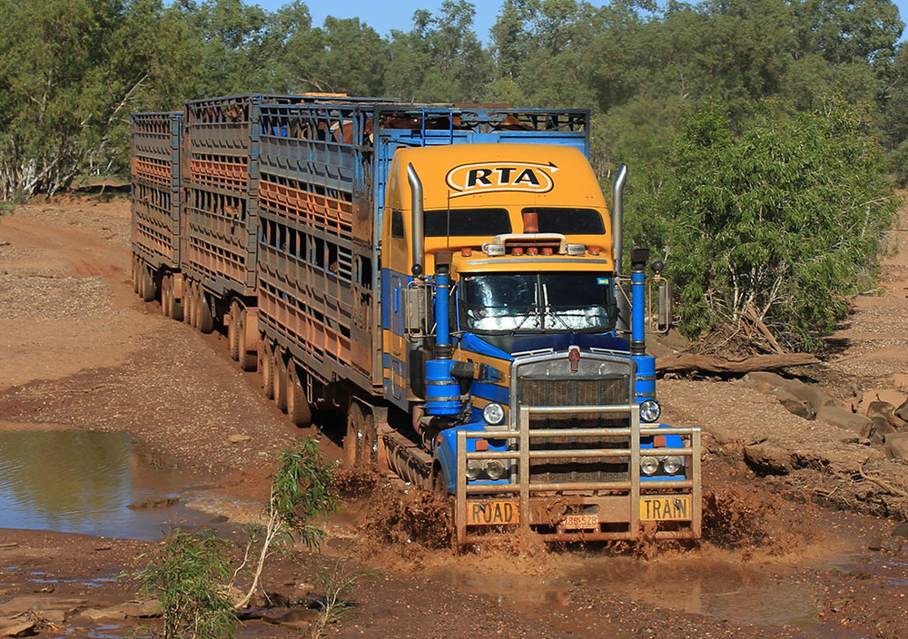 RTA-Cattle-Trucks-in-Christmas-Creek-WA.jpg