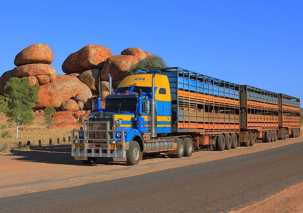 RTA-Cattle-Trucks.jpg