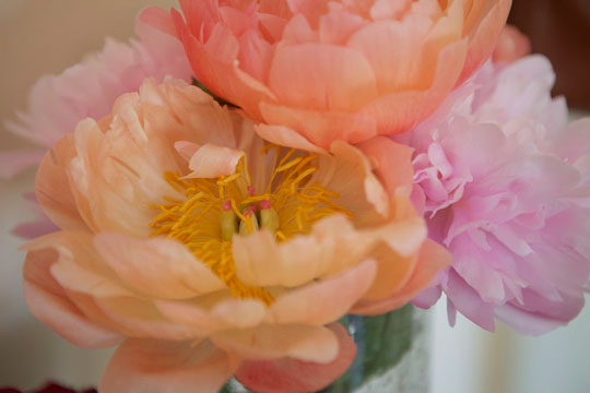 Lobster-and-swan-peonies-6