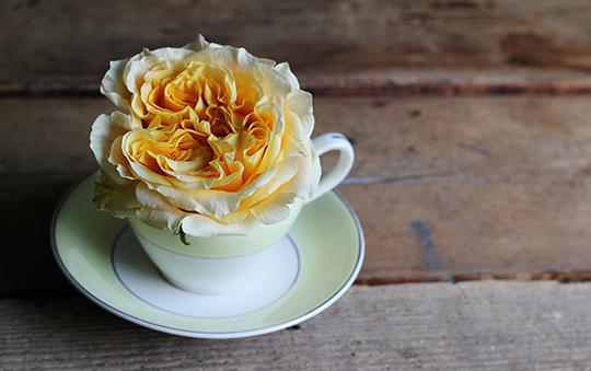 teacup-posy-3.jpg