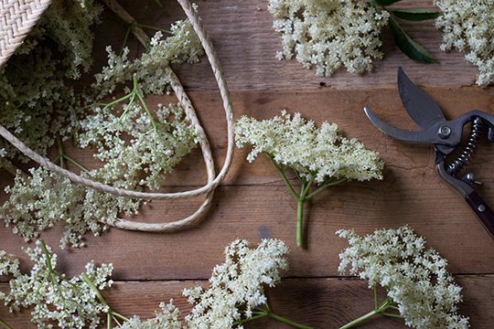elderflower-s2.jpg