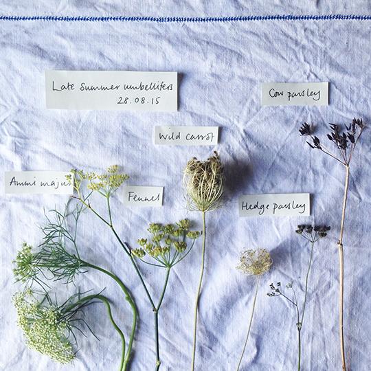 emma-mitchell-my-favourite-flower-3