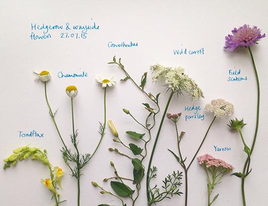 emma-mitchell-my-favourite-flower-8
