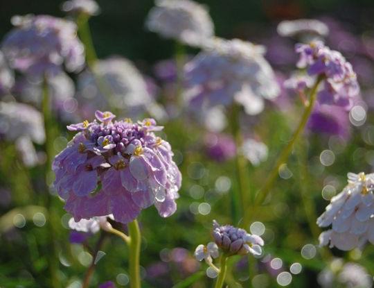 higgledy-garden-3