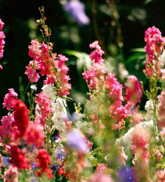 higgledy-garden