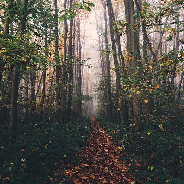 ourwoods
