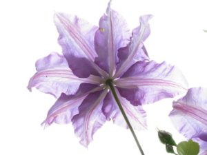 flower-300x225.jpg