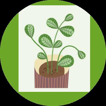 1,5 - Überlebende Pflanze