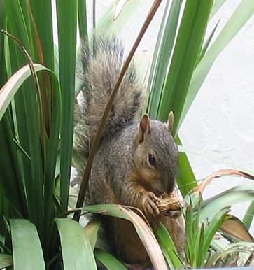 squirrels in the hood lisa maliga