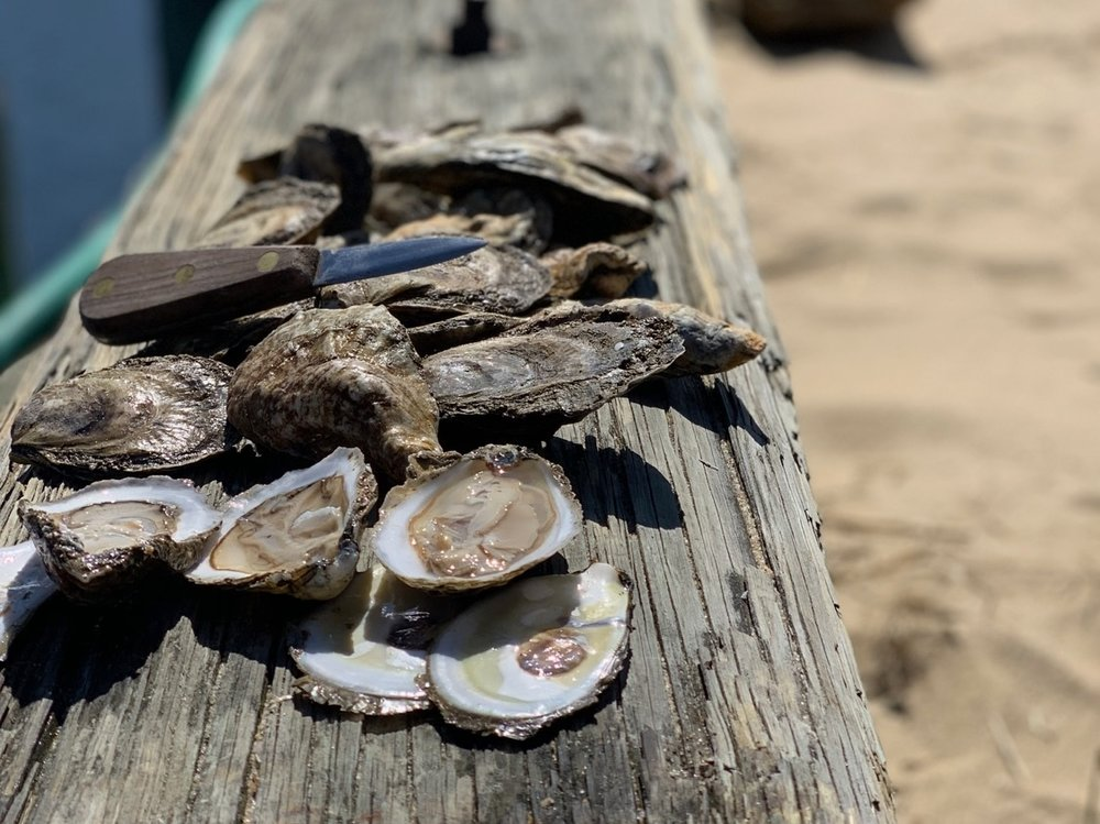 WELLFLEET OYSTERS - From our farm daily.
