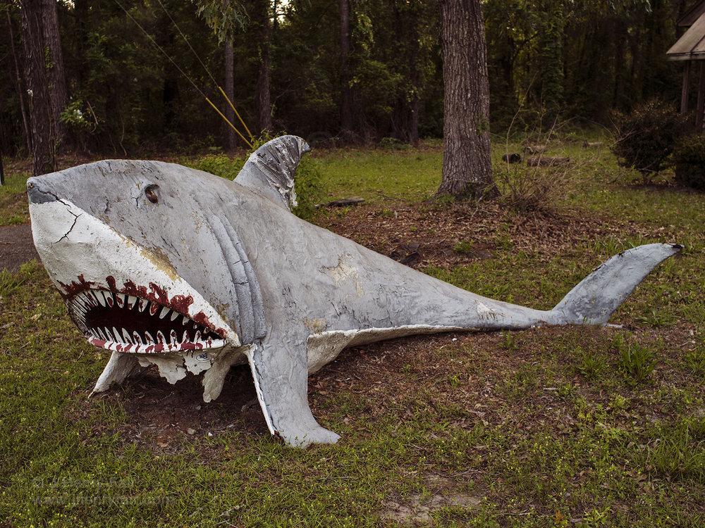 Shark figure on side of road