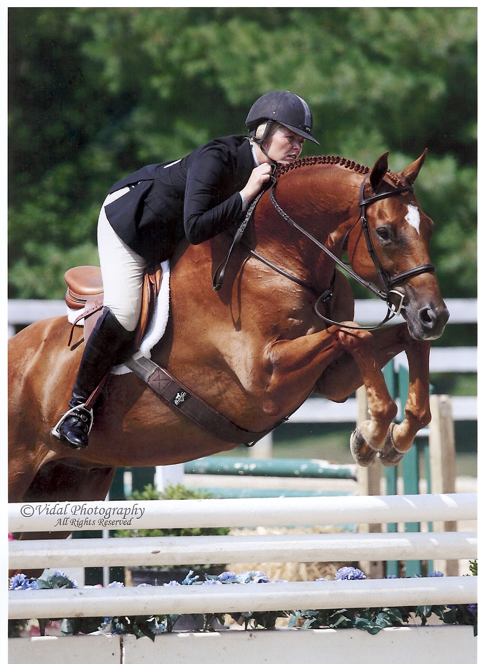 Hampton Roads Equine Veterinary Clinic patient photo