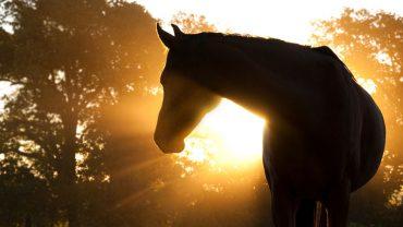 Horse-shadow.jpg