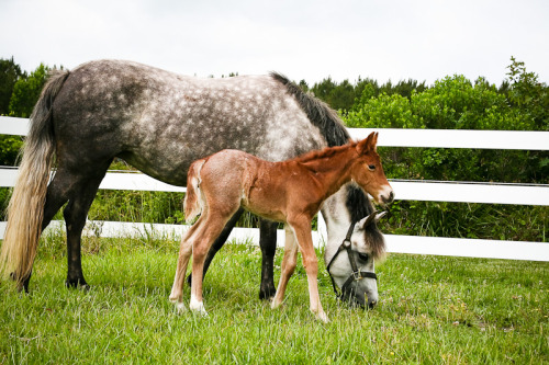 vaccination is the best way to help your horses stay healthy! -