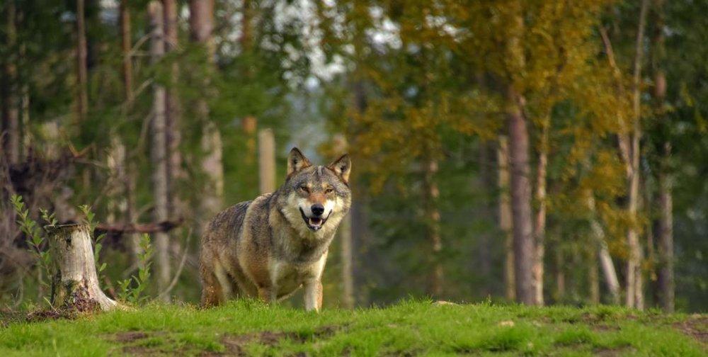 ulv.jpg