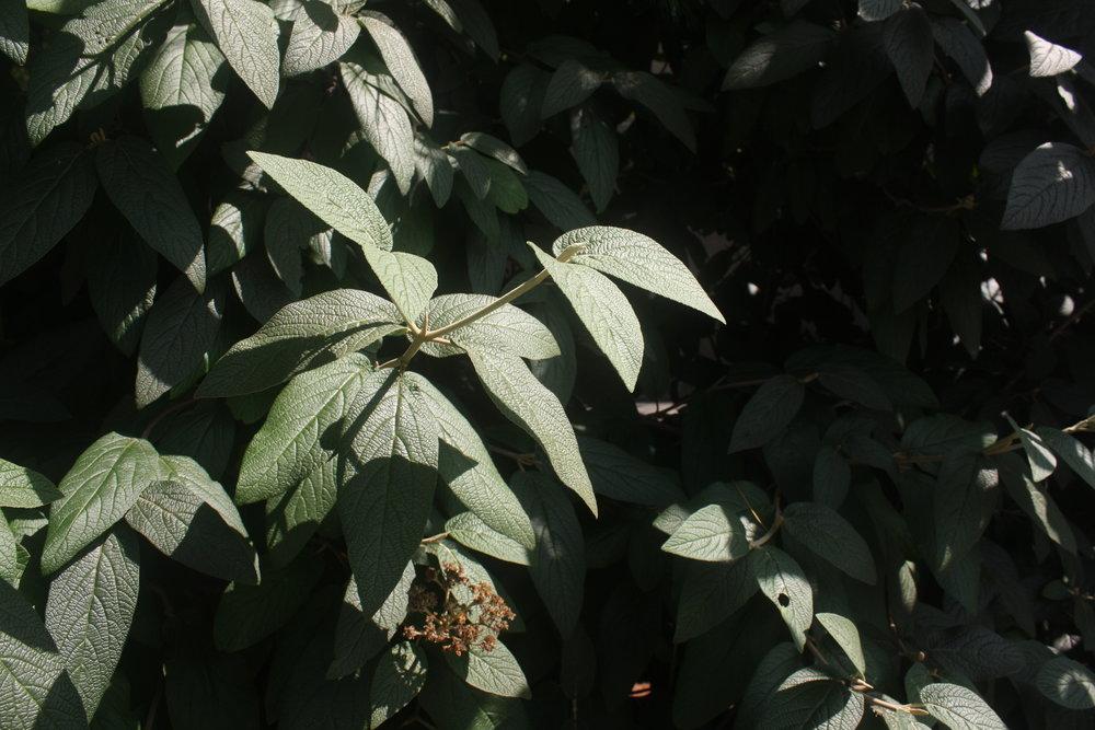 green-plant-in-sun.JPG