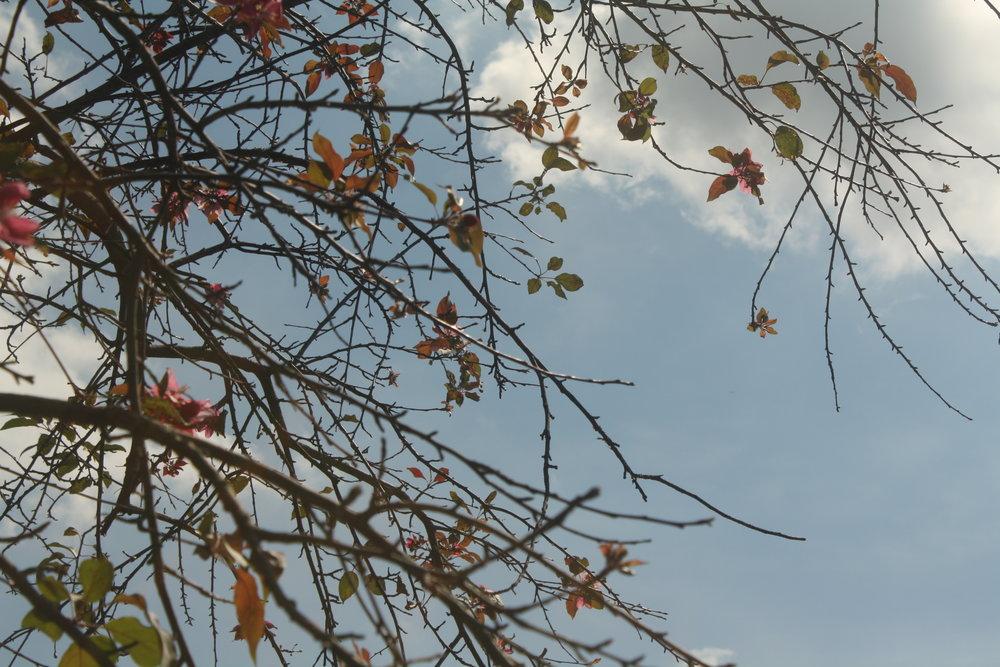 plant-and-sky.JPG