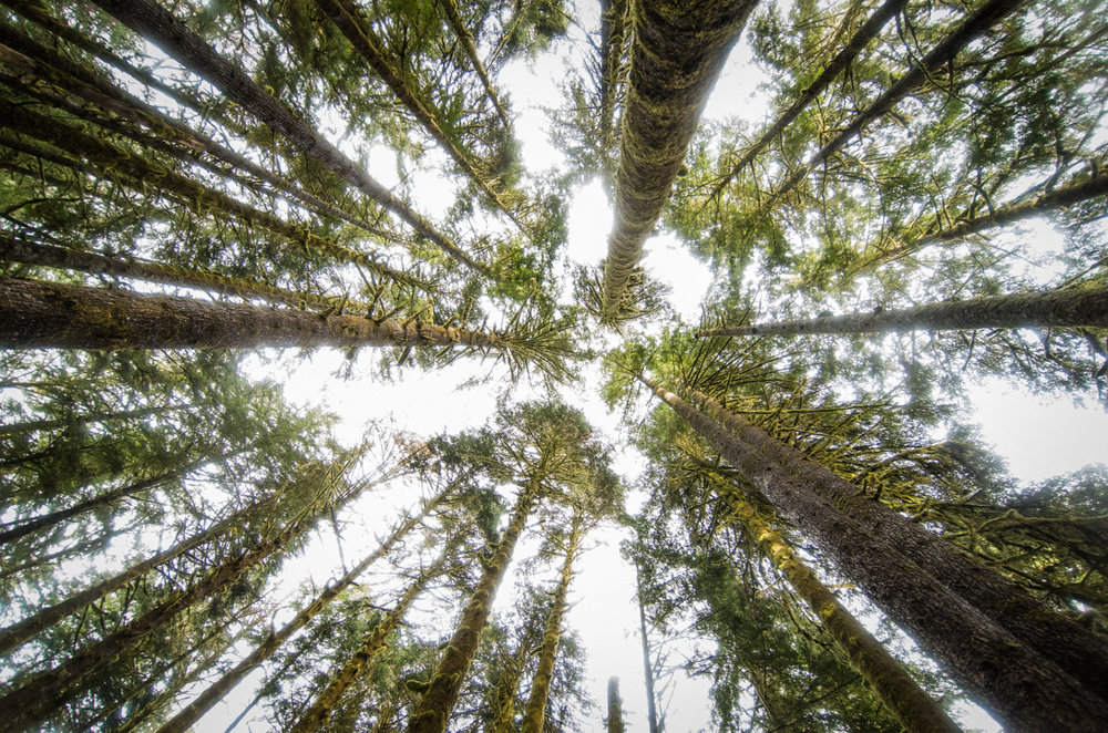 The Challenge of Defining 'Old Growth' - A great explanation of the varied definitions of what old growth forests are by the Ancient Forest Exploration and Research