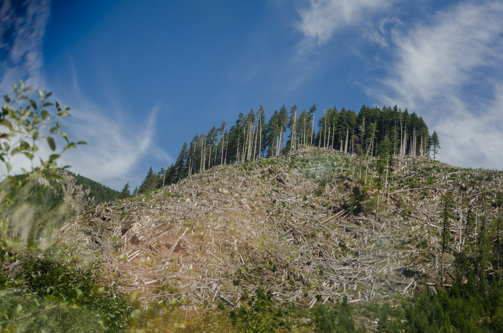 Old Growth Logging - an industry perspective - The Controversy Over Old-Growth ForestsBy Jim Girvan
