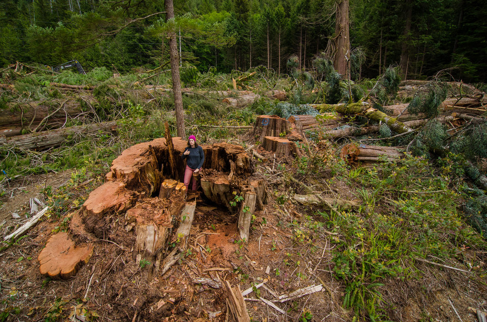 Logging on Vancouver Island - Statistics and maps of current old growth areas