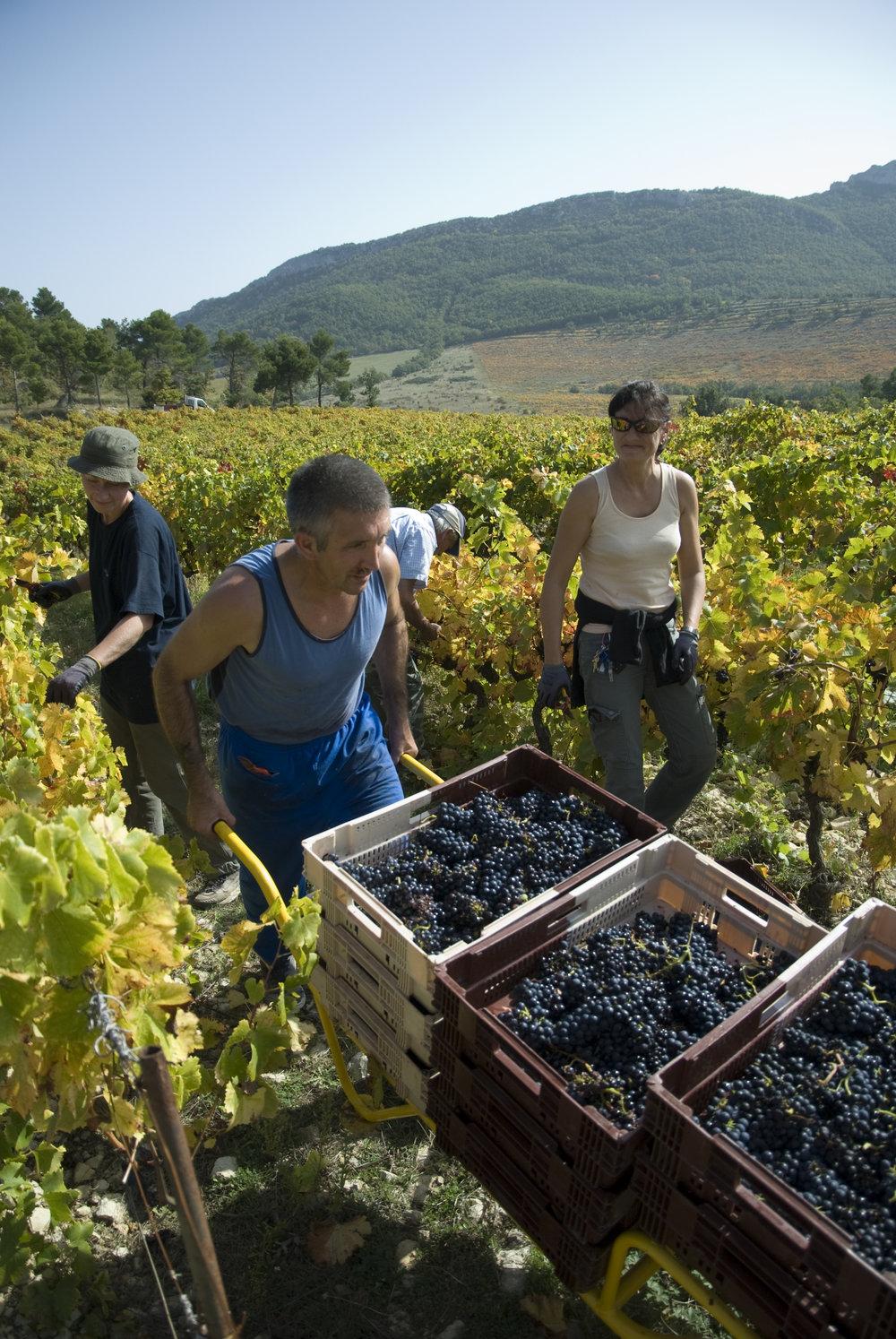 Chene  Bleu Vineyard