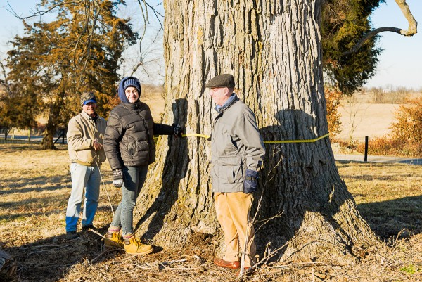Measuring a big Chinquapin Oak on a cold day at Oakland Farm.