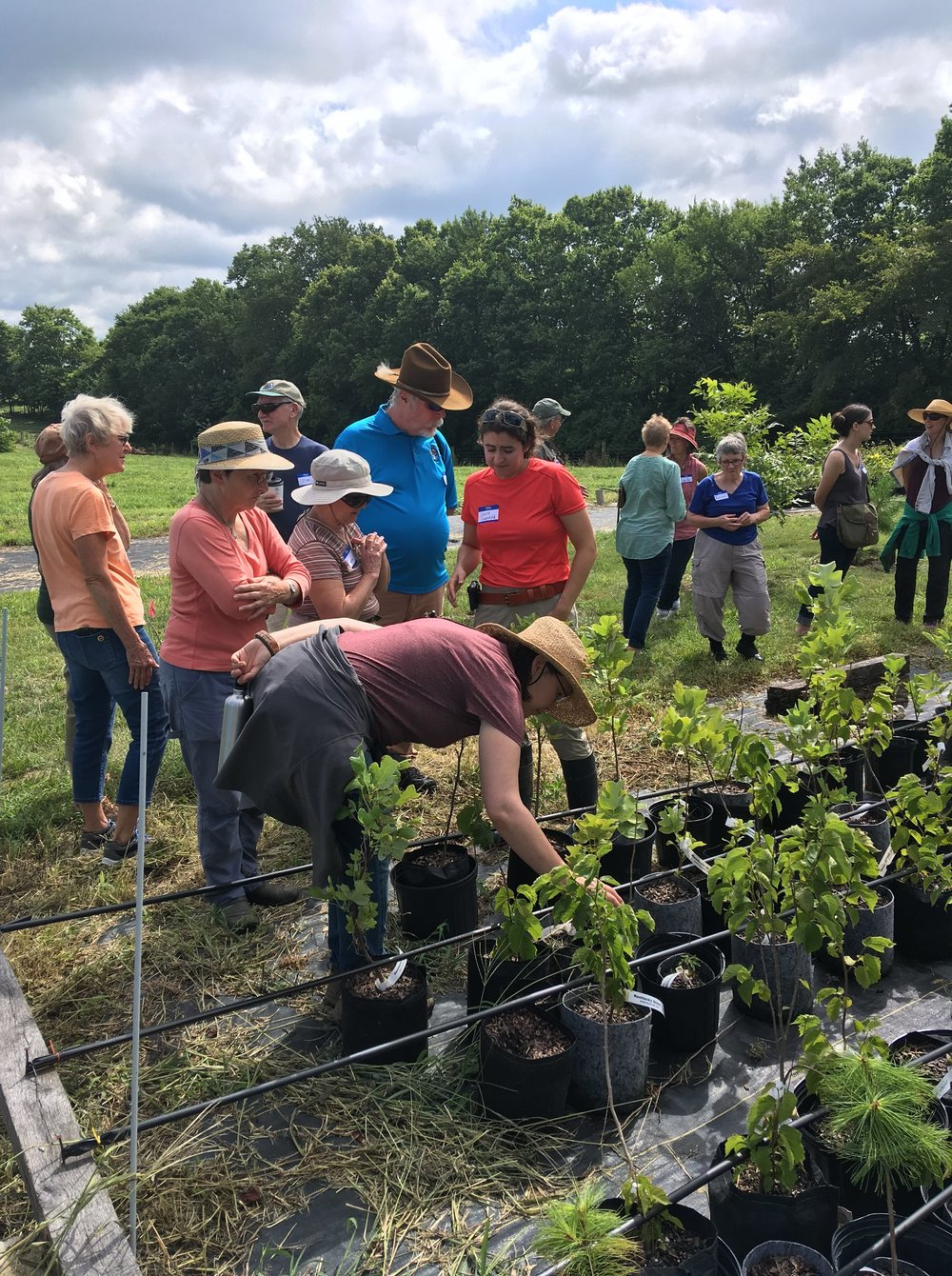 Wild Ones Field Day at the nursery, Summer 2018.