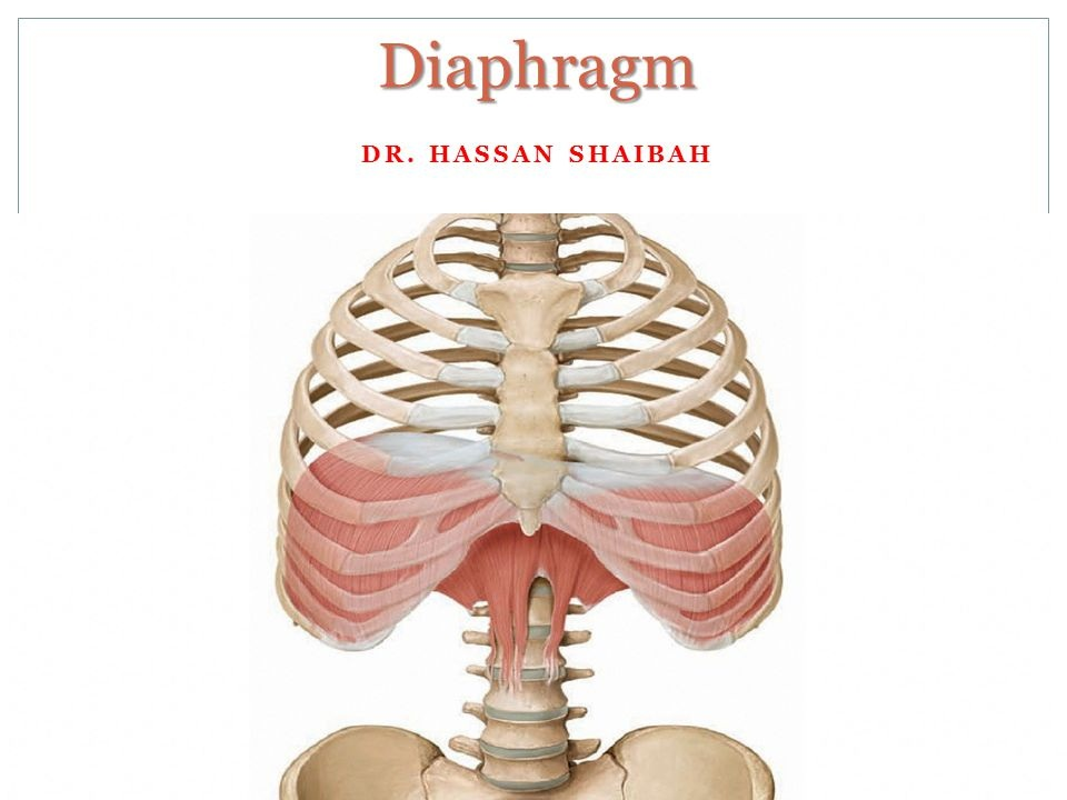 "Dr. Kaylee or FEMMEmpowerment and Advocacy DO NOT own the rights to this image. If you type in ""diaphragm"" on Google, you will come across it. Please give credit where deserved!"
